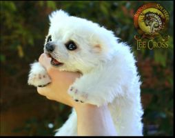Handmade Poseable Baby Polar Bear by Wood-Splitter-Lee