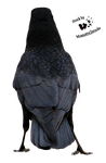 Cut-out stock PNG 58 - crow back by Momotte2stocks