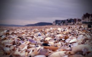 Cabourg Shells by freaky-design