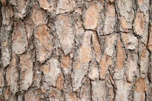 Bark Texture 1 by elf-fu-stock