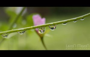 drop_2 by LeronMasoN