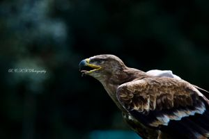 aim-and-go by PiTurianer