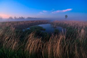 The Fog by MarshallLipp