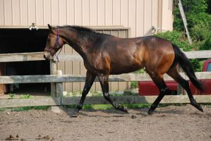 QH 7 by Spotstock