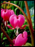 A little pink heart by Klytia70