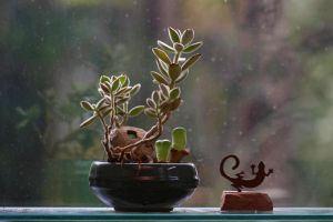 House Plant and Lizard by organicvision