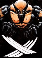 Wolverine color sketch by RyanStegman