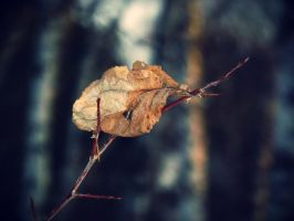 A leaf on a branch by XDmoney