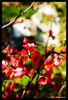 Spring is rebirth by photofenia