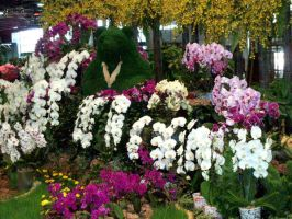 Orchids on Floralia by kate44