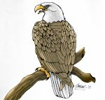 American Eagle by TickleMeHoHo
