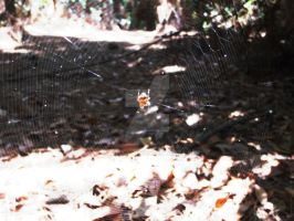 A Spider and Her Web by Alana-Lyn