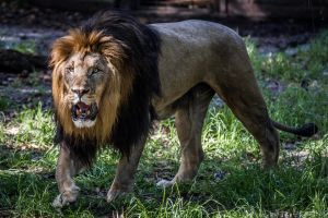 The King by 904PhotoPhactory