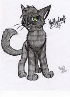 Hollyleaf is sry by Icewhisker16