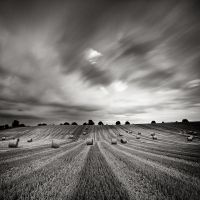 In The Fields VI by EmilStojek