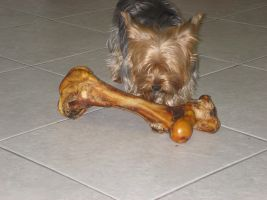 GIVE THE DOG A BONE .... by PISAM