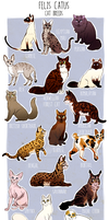 Cat Breeds by Superior-Silverfox