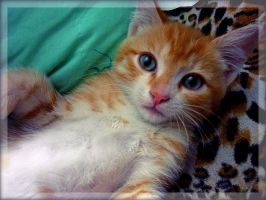 My ginger kitten by UkkiRainbow