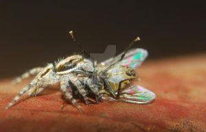 Jumping Spider and Fly 2 by Larah88