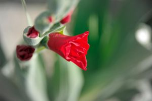 Point of red by ApoTerra