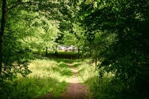 Forest Paths 1 by LuDa-Stock