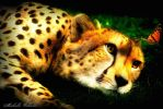 Cheetah and Butterfly by ICMDesigned