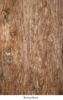 bark texture 258 by Rainny-Stock