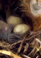 Still Life Painting of a Man Made Nest by Larainjp