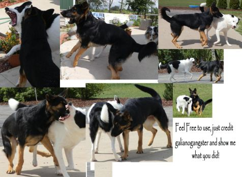 Dog Fight Stock Pack 1 by galianogangster