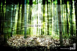 Bamboo forest by iheb003