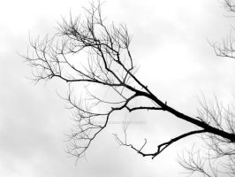 Bare Branches by AchisutoShinzo
