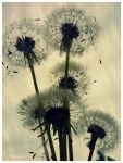 dandelions by Narcolepcia
