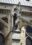 Gargoyle of the Notre Dame Cathedral by EUtouring