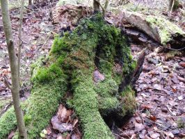 Mossy Tree Stump by Thiefyfinn