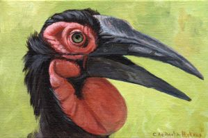 Southern Ground Hornbill by sschukina