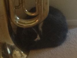 ERMAGURD KITTY ISH SLEEPIN NEXT TO MAH TUBA by M0ssie