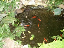 FishPond5 by RagedAngelStock