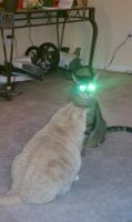 My cats shoot lazers ... by AliceLovesChes
