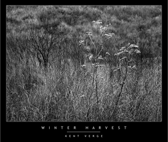 Winter Harvest by wulfster