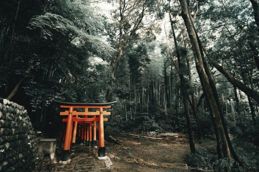 Mystic Japanese Forest. by Bunnis