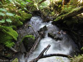 Heart of the Rainforest Hike 2013 10 by Mattsma
