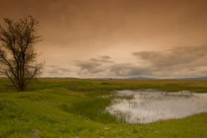 Landscape with Tree and Pond by happeningstock