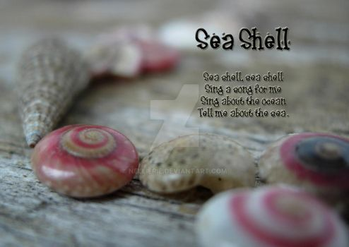 Sea Shell by NellieRie