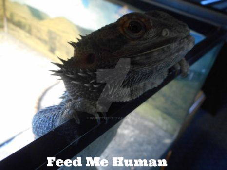 Feed Me Human by oohButterfly