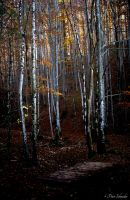 Autumn forest. by Phototubby