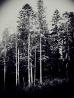 Cold Of Silent Forests by Edeleth