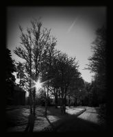 Winter in black and white by Skycode