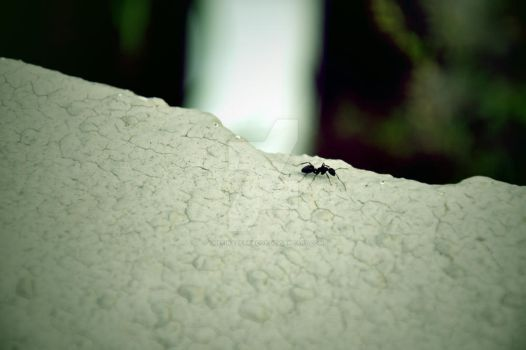 The Lone Ant by TheFinalParadox