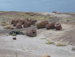 Trips to Petrified Forest NP 29 by Sting-raptor