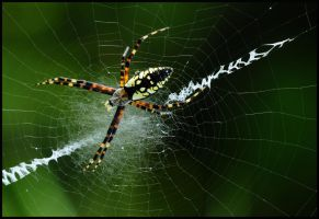 1 spider by RichardRobert